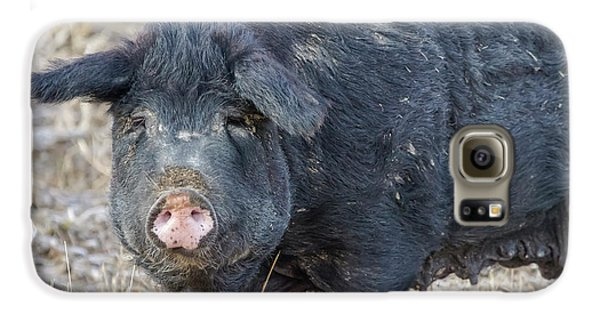 Galaxy S6 Case featuring the photograph Female Hog by James BO Insogna