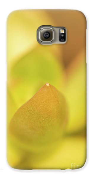 Galaxy S6 Case featuring the photograph Find Focus In Nature by Ana V Ramirez