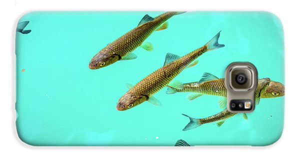 Fish School In Turquoise Lake - Plitvice Lakes National Park, Croatia Galaxy S6 Case