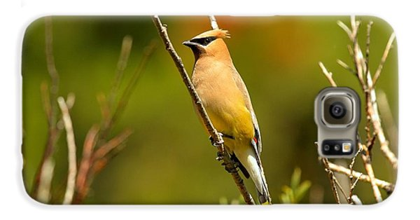 Fishercap Cedar Waxwing Galaxy S6 Case by Adam Jewell