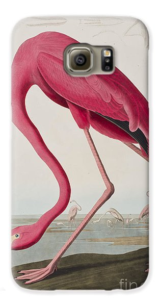 Flamingo Galaxy S6 Case by John James Audubon