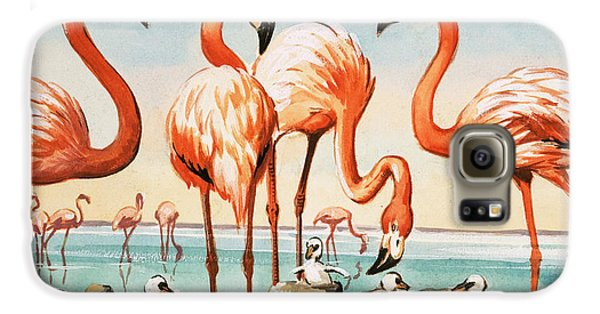 Flamingoes Galaxy S6 Case by English School
