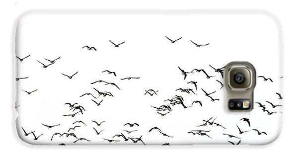 Flock Of Beautiful Migratory Lapwing Birds In Clear Winter Sky I Galaxy S6 Case by Matthew Gibson