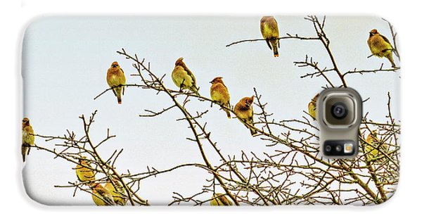 Flock Of Cedar Waxwings  Galaxy S6 Case by Geraldine Scull