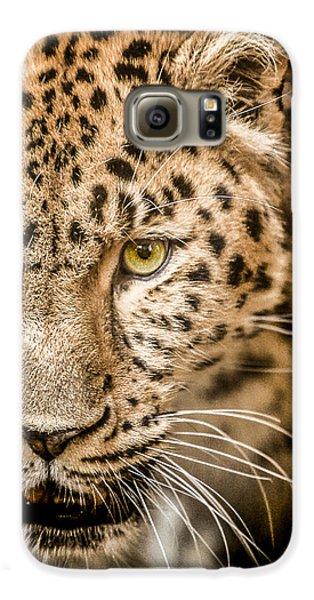 Leopard Galaxy S6 Case - Focus by Paul Neville