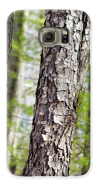 Galaxy S6 Case featuring the photograph Forest Trees by Christina Rollo