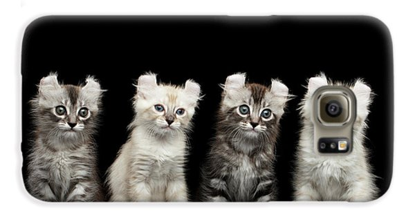 Four American Curl Kittens With Twisted Ears Isolated Black Background Galaxy S6 Case