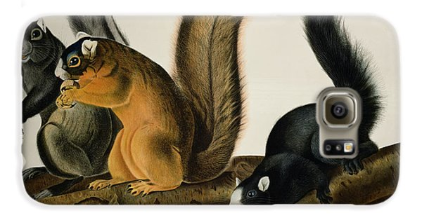 Fox Squirrel Galaxy S6 Case by John James Audubon