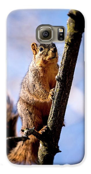 Fox Squirrel's Last Look Galaxy S6 Case by Onyonet  Photo Studios