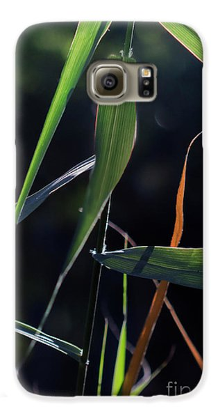 Galaxy S6 Case featuring the photograph Fragment by Linda Lees