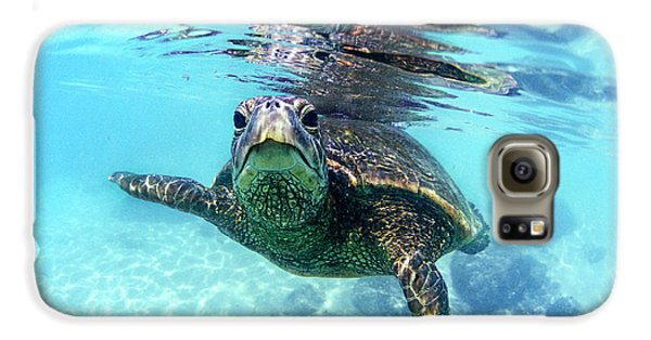Reptiles Galaxy S6 Case - friendly Hawaiian sea turtle  by Sean Davey