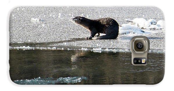 Frosty River Otter  Galaxy S6 Case