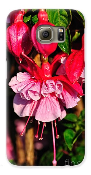 Fuchsias With Droplets Galaxy S6 Case