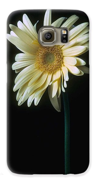 Gerber Daisy Galaxy S6 Case by Laurie Paci