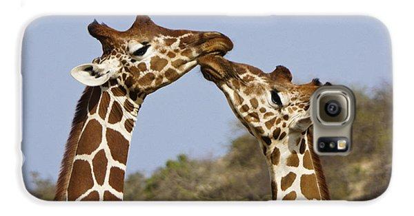Giraffe Kisses Galaxy S6 Case by Michele Burgess