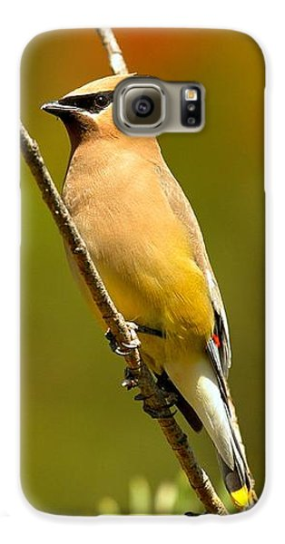 Glacier Cedar Waxwing Galaxy S6 Case by Adam Jewell