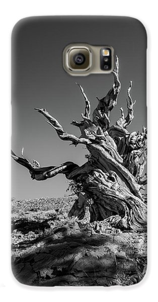 Gnome Tree Galaxy S6 Case