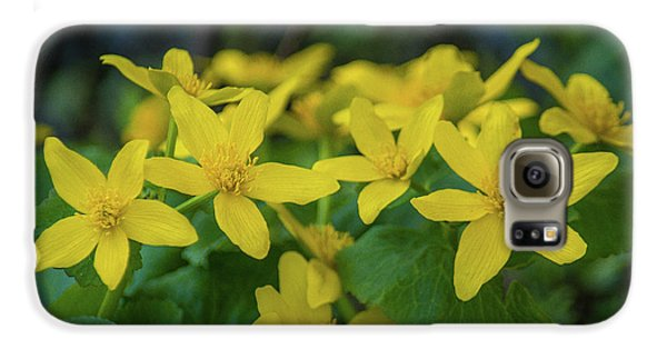 Galaxy S6 Case featuring the photograph Gold In The Marsh by Bill Pevlor