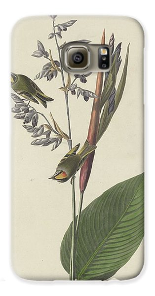 Golden-crested Wren Galaxy S6 Case by Rob Dreyer