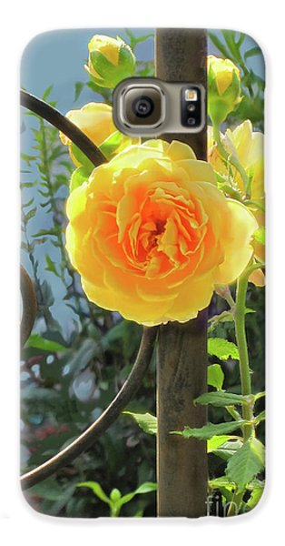 Galaxy S6 Case featuring the photograph Golden Ruffled Rose On Iron Trellis by Nancy Lee Moran