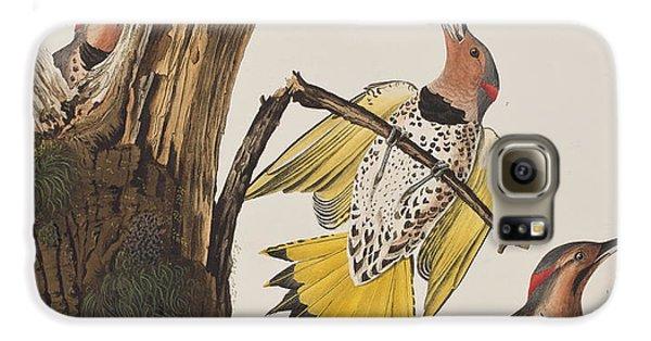 Golden-winged Woodpecker Galaxy S6 Case by John James Audubon