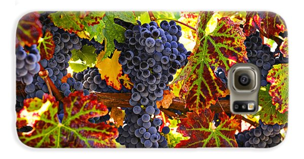 Wine Galaxy S6 Case - Grapes On Vine In Vineyards by Garry Gay
