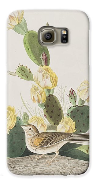 Grass Finch Or Bay Winged Bunting Galaxy S6 Case by John James Audubon
