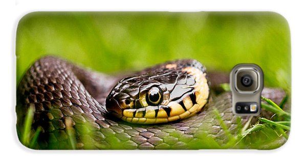 Grass Snake - Natrix Natrix Galaxy S6 Case