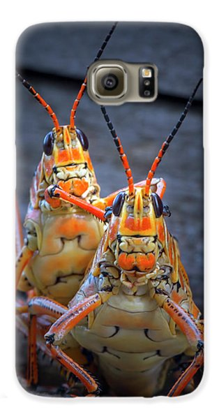 Grasshoppers In Love Galaxy S6 Case
