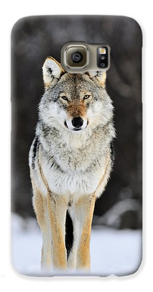 Wolves Galaxy S6 Case - Gray Wolf In The Snow by Jasper Doest