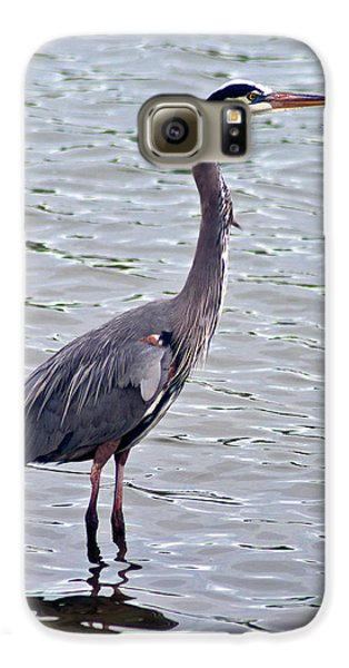 Galaxy S6 Case featuring the photograph Great Blue Heron by Bill Barber