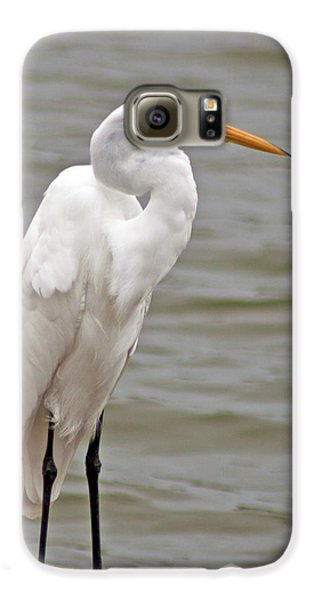 Galaxy S6 Case featuring the photograph Great Egret by Bill Barber