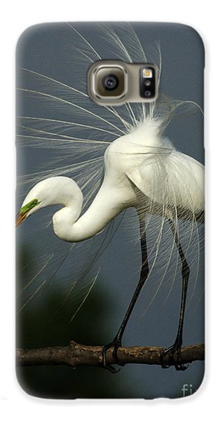 Majestic Great White Egret High Island Texas Galaxy S6 Case by Bob Christopher