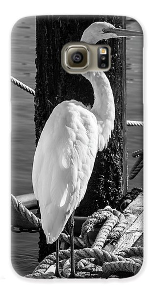 Great White Heron In Black And White Galaxy S6 Case by Garry Gay