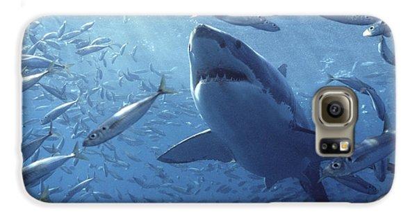 Great White Shark Carcharodon Galaxy S6 Case