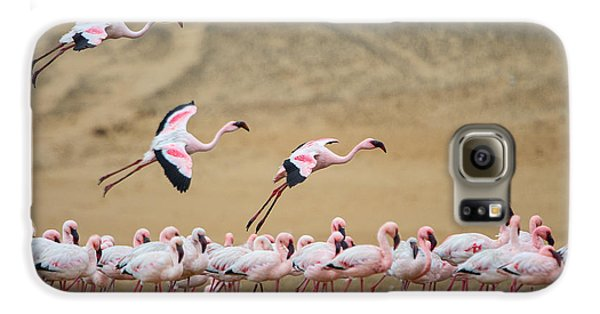 Greater Flamingos Phoenicopterus Galaxy S6 Case by Panoramic Images