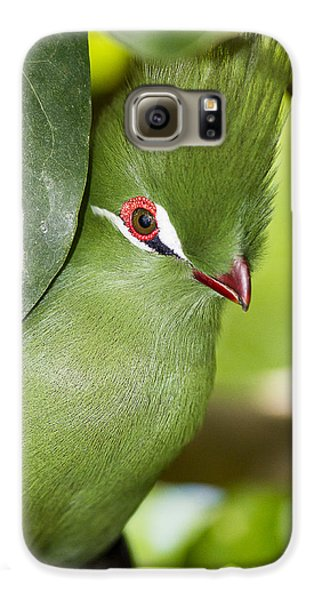 Green Turaco Bird Portrait Galaxy S6 Case