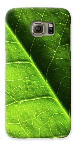 Galaxy S6 Case featuring the photograph Green Leaf Veins by Ana V Ramirez