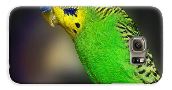 Green Parakeet Portrait Galaxy S6 Case by Jai Johnson