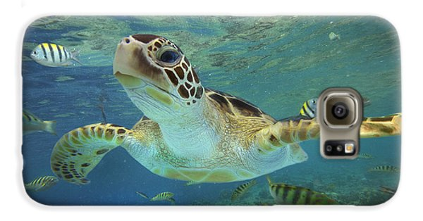 Green Sea Turtle Chelonia Mydas Galaxy S6 Case by Tim Fitzharris