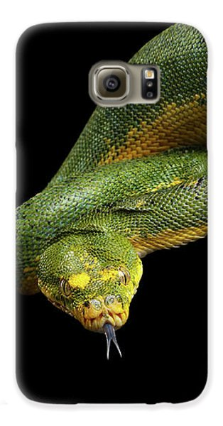 Green Tree Python. Morelia Viridis. Isolated Black Background Galaxy S6 Case by Sergey Taran
