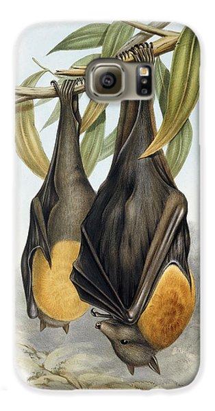 Grey Headed Flying Fox, Pteropus Poliocephalus Galaxy S6 Case by John Gould