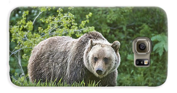 Grizzly Bear Galaxy S6 Case