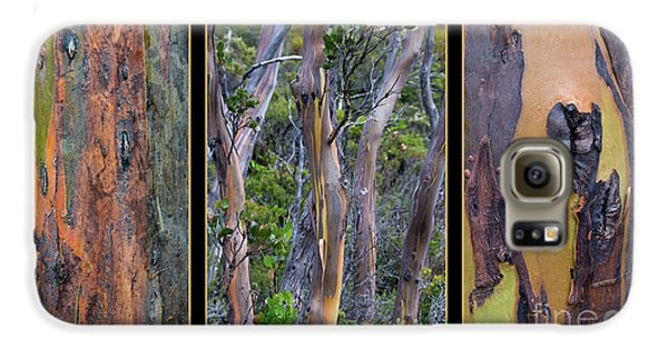 Gum Trees At Lake St Clair Galaxy S6 Case by Werner Padarin