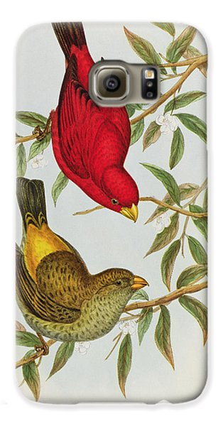 Haematospiza Sipahi Galaxy S6 Case by John Gould