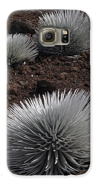 Haleakala Silverswords Galaxy S6 Case