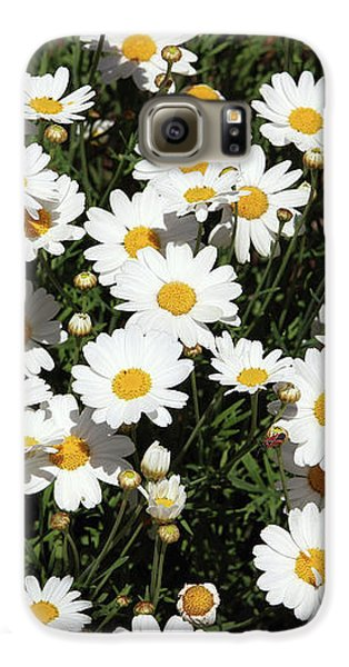 Daisy Galaxy S6 Case - Happy Daisies- Photography By Linda Woods by Linda Woods