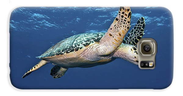 Reptiles Galaxy S6 Case - Hawksbill Sea Turtle In Mid-water by Karen Doody