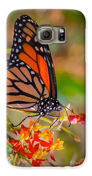 Hello Butterfly Galaxy S6 Case