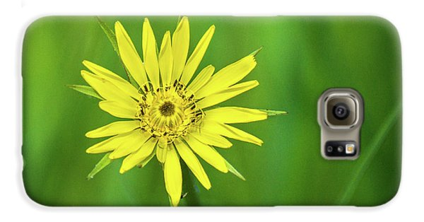 Galaxy S6 Case featuring the photograph Hello Wild Yellow by Bill Pevlor